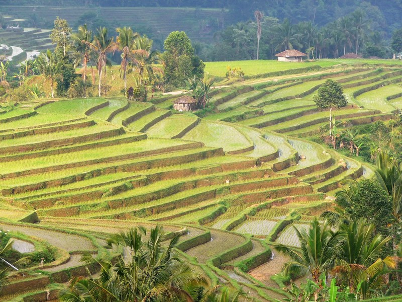 Bali en famille - rizières