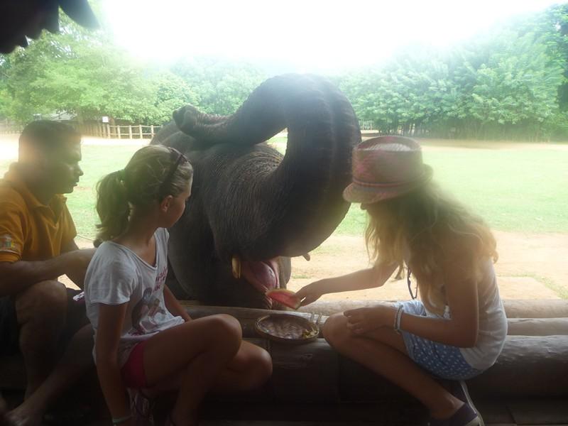 Orphelinat des éléphants de Pinnewala