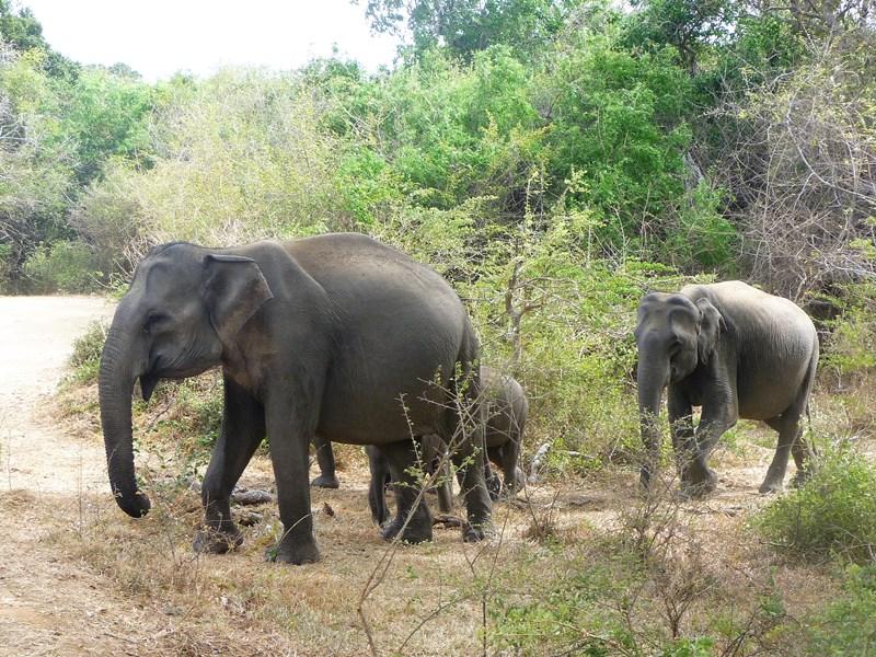 vacances en famille au Sri Lanka