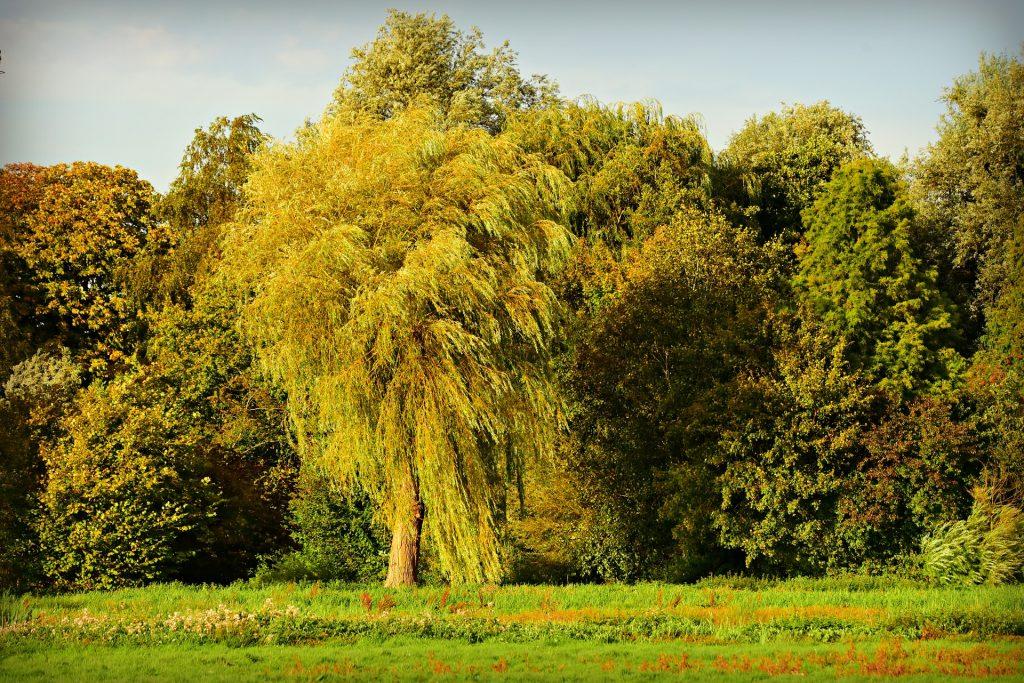 arbre-sylvothérapie