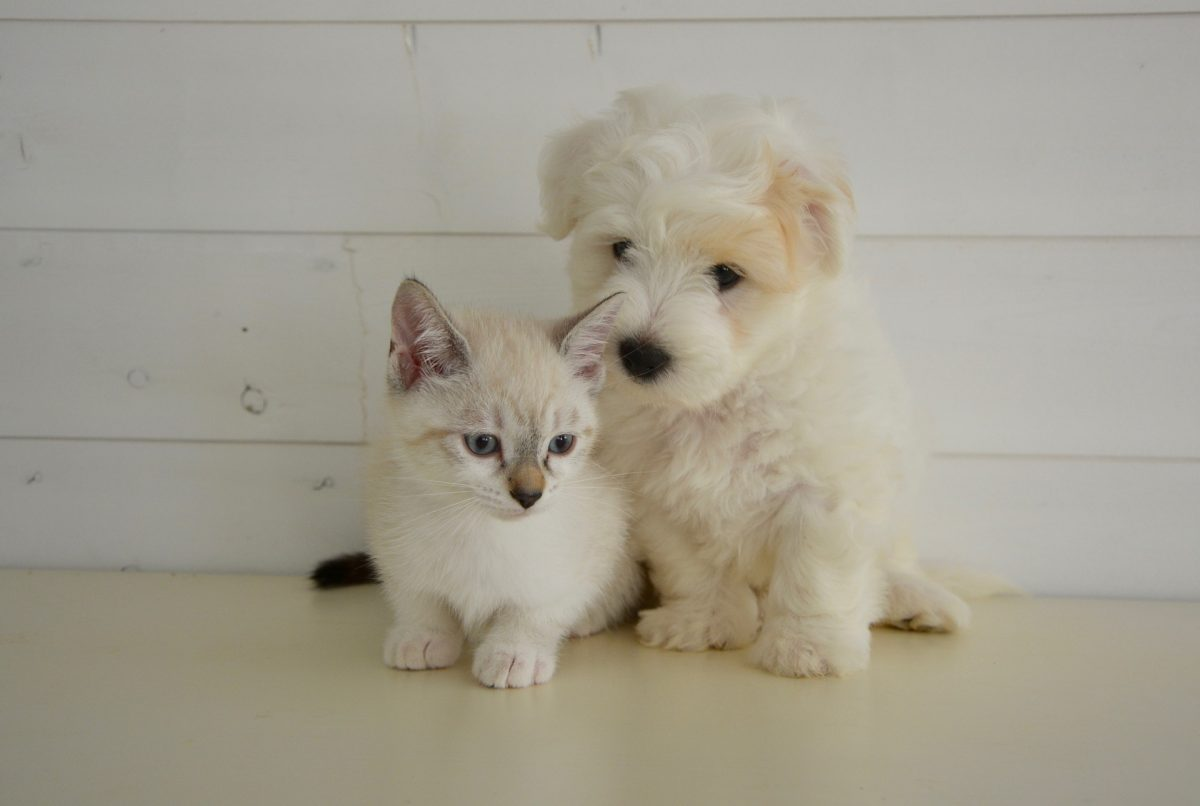 Sites web pour animaux de compagnie