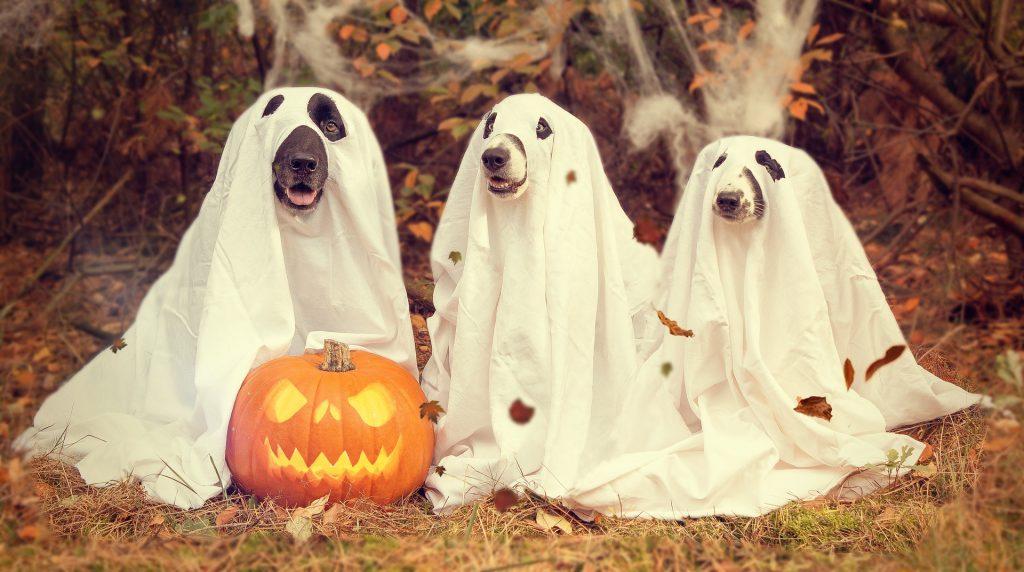 Halloween simplissime...