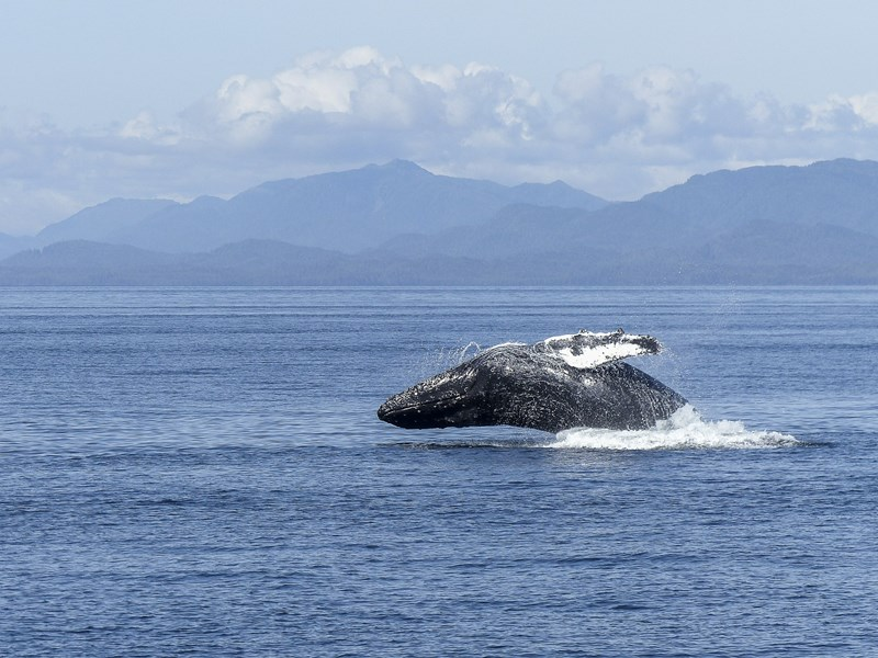 observation-baleine-tadoussac-canada