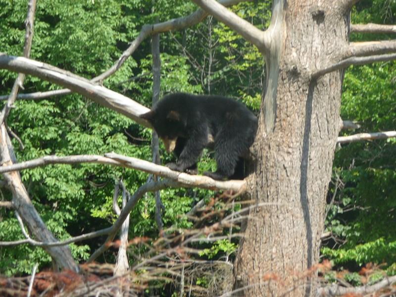 ours-zoo-saint-felicien