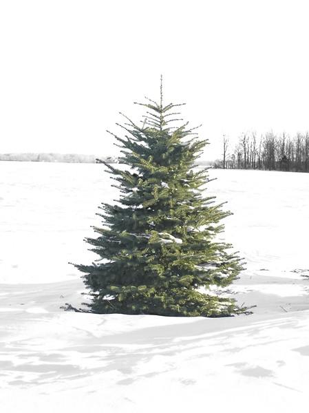 Nos 5 conseils pour faire durer le plus longtemps possible son sapin de Noël !
