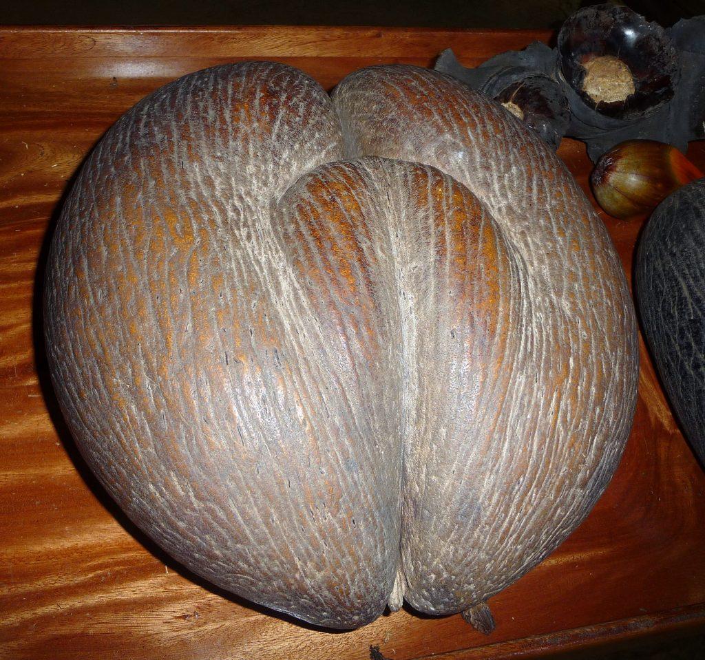 cocofesse seychelles