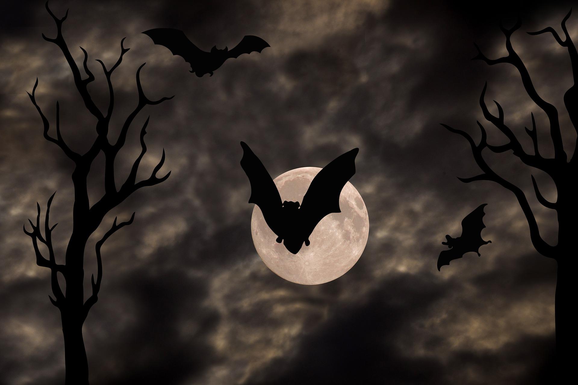 Soirée Twilight, thriller ou Nuit de l'horreur