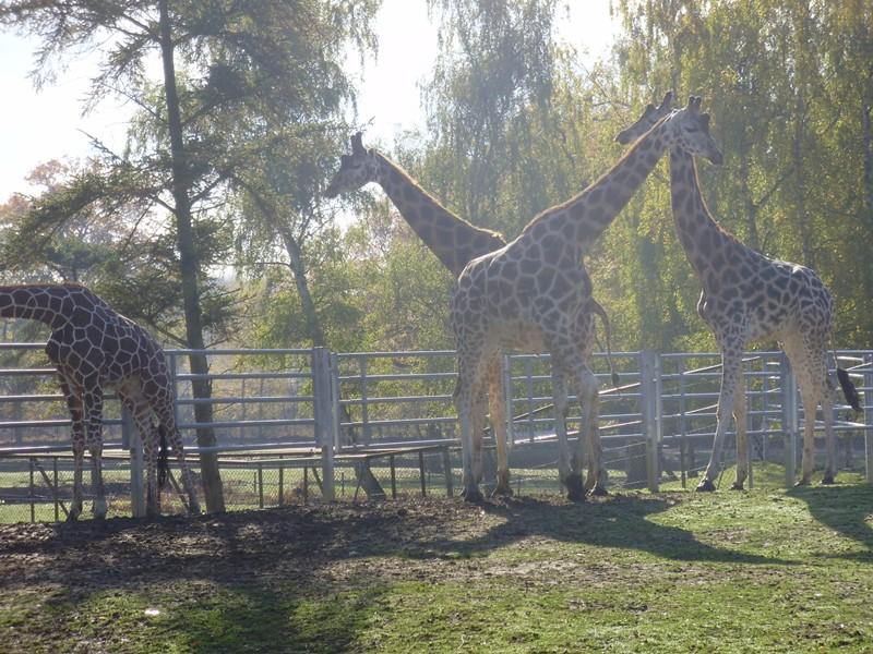 sortie 100% nature: le zoo avec les enfants